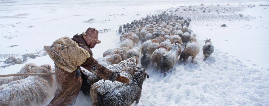 Herders_Beitragsbild
